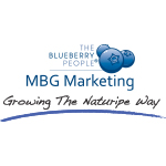 MBGMARKETING